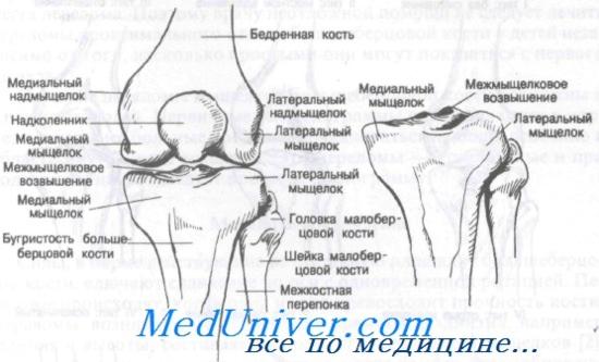 mozgatáskor a térdízület fájdalma a térd artrózisa mi ez