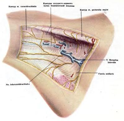 boka osteoarthritis kezelésére