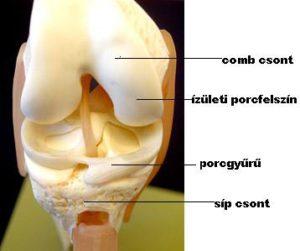 artrózis kezelése aloe juice-val a bokaízületek lábainak fájdalma okoz