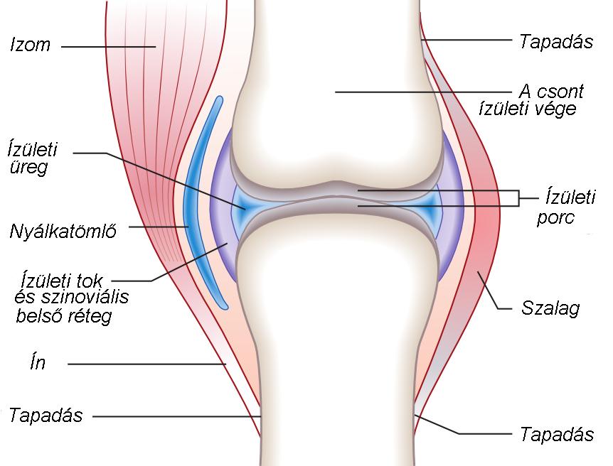 térdízület elmozdult kálium és magnézium ízületi fájdalmak kezelésére
