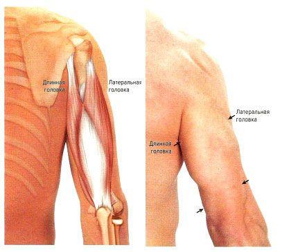 Fájdalom a kar meghosszabbításában a vállízületben, diagnosztika