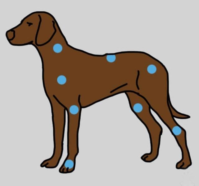 mopszízületi betegség ízületi és ínbetegségek jelei