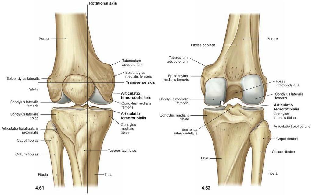 térd artritisz, mint kezelni jobb váll fájdalom és ropogás