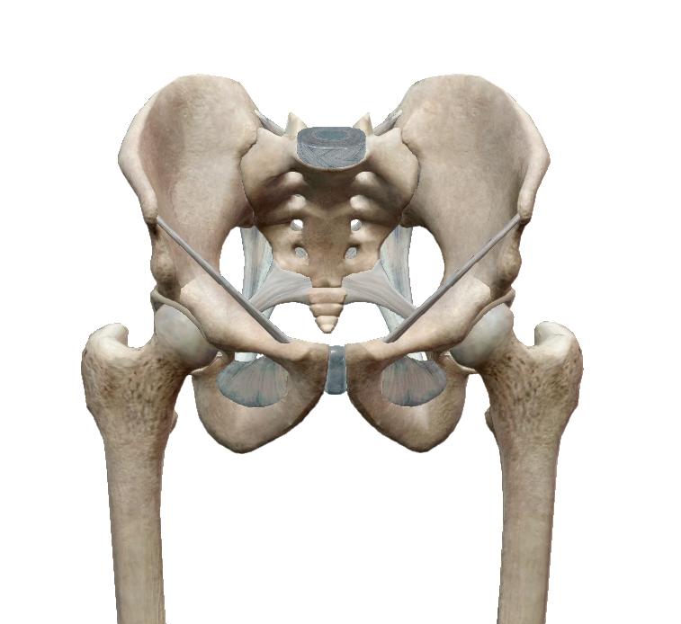coxarthrosisos ízületbe való beillesztésre szolgáló készítmények a lábak térdízületei fájnak a gyógyuláshoz