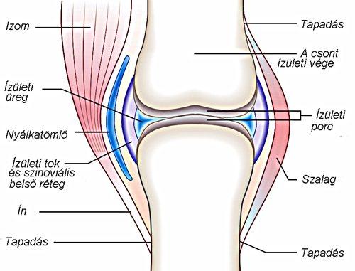 ízületi betegség neve a jobb boka ízületének akut izületi gyulladása