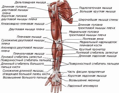 kollagenozis kötőszöveti betegségek a lumbosakrális készítmények csontritkulása
