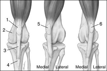 térdízület fájdalom blokk kenőcs a könyökízület gyulladására