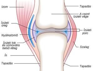 a térd stádium artrózisa 1