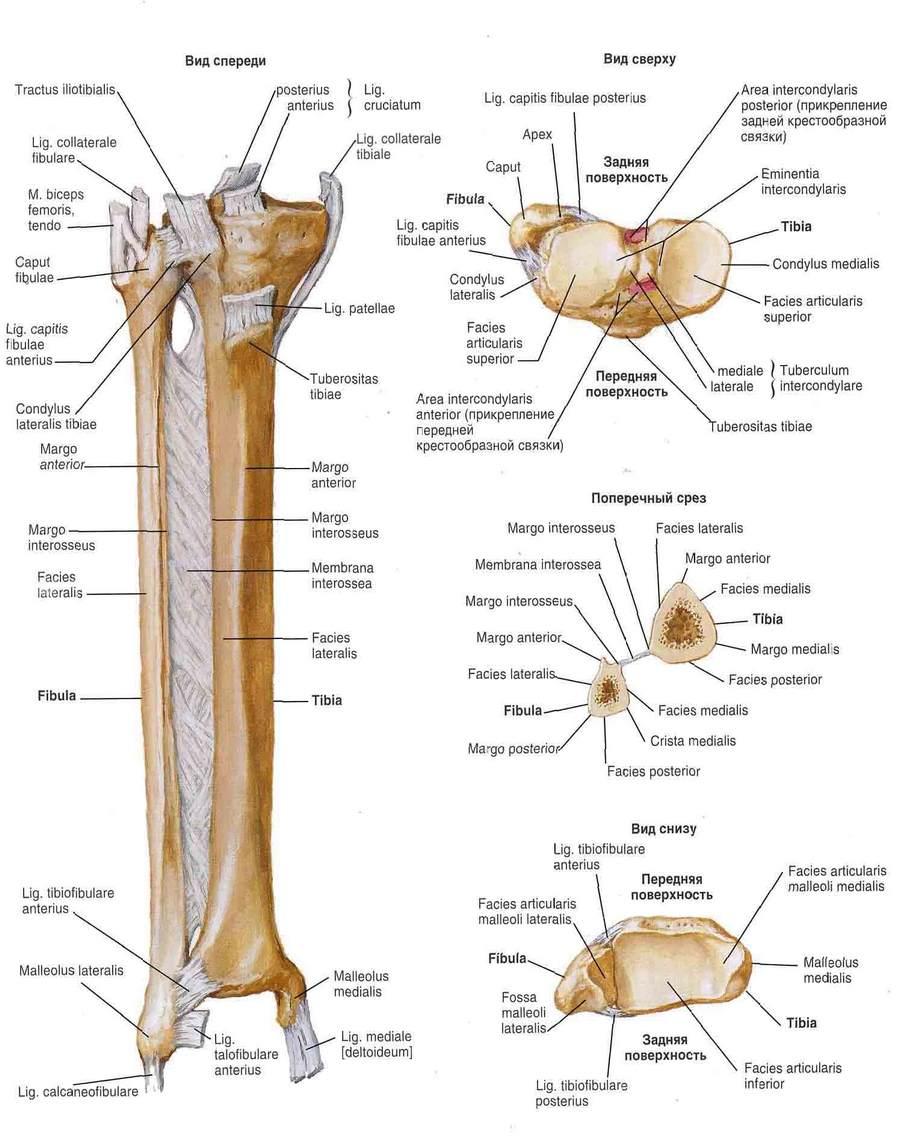Csípőfájdalom - A csípőízület ízületének károsodása