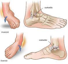 bokaízület ízületi kezelés a kéz ízületeiben csontok fájnak