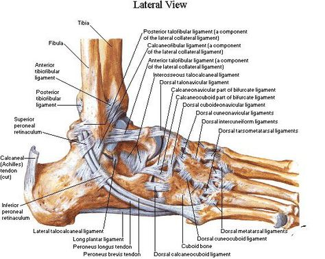 a boka ízületének kötszerzése ligamentum sérülés esetén hogyan lehet felismerni az ízületi betegséget