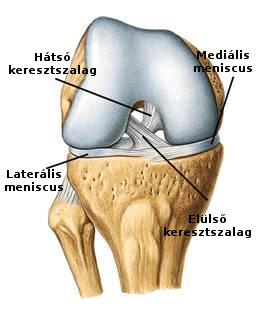 Meniszkusz a térdízület kezelésében. Meniszkusz-sérülés tünetei és kezelése