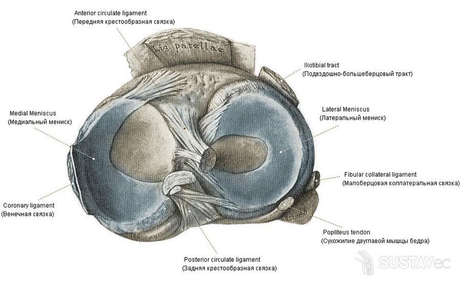 effúzió a térdízület kezelésének felső inverziójában az ízületek fájdalommal hajlanak