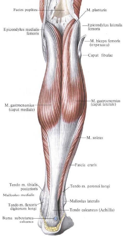 térdízület kapszula vékony amikor minden csont és ízület fáj
