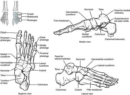 fáj a lábujj ízületei hogyan enyhíthető az ízületi gyulladás és a bőrpír