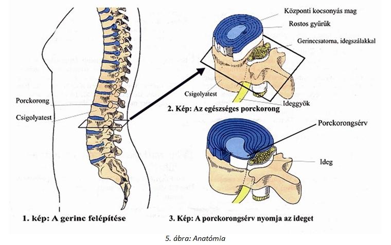 gerinc sérv a térdízületekben jobb könyökízület kezelése