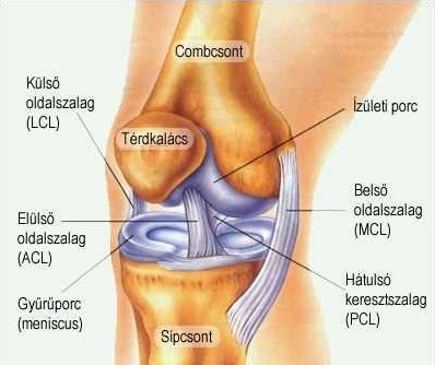 kerékpár fáj térdízület mi a csípőcsontritkulás kezelés