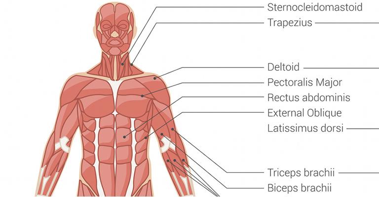 ornithogalum testbalzsam ízületi betegségek kezelésére