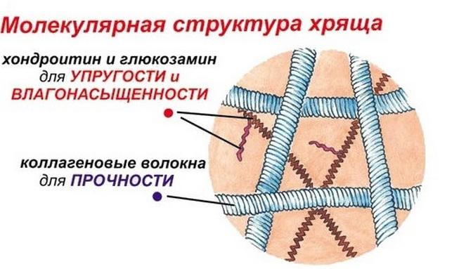 intramuszkuláris glükózamin készítmények ízületi fájdalom könyök és térd okai