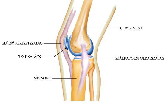 térdízület elmozdult fáj, hogy fáj a csípőízület