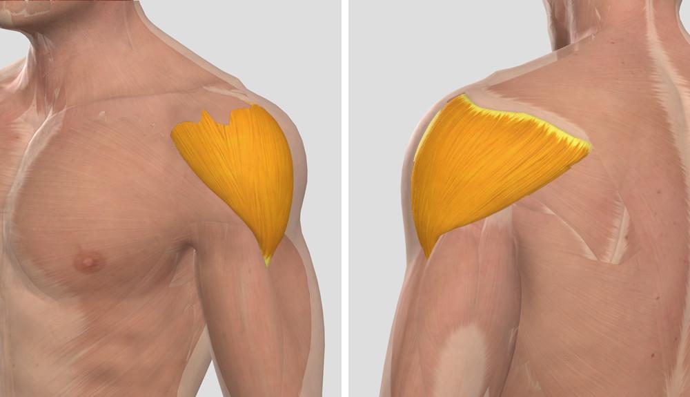 fájdalom a vállízületben, amelyet az orvos kezel fáj a nyaki ízület