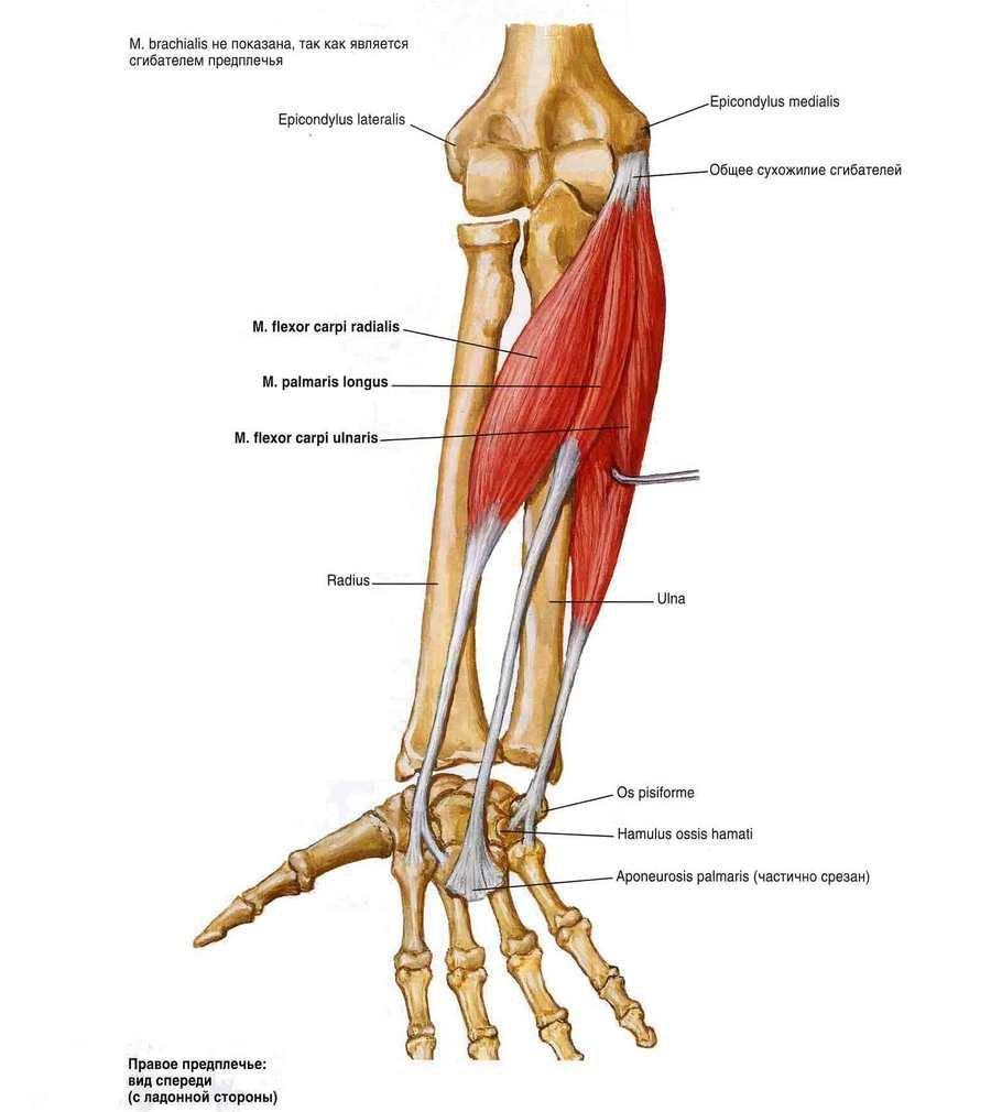 az artrózis kezelésének modern módszerei a kondroitin és a glükozamin költsége