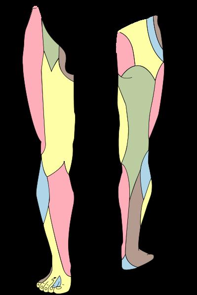 a l4-l5 ívízületek ízületi gyulladása
