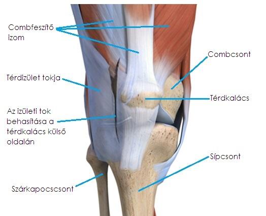ízületi kezelés malacokban artrosis-arthritises boka kezelés