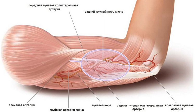 a vállízület ízületeinek sérüléseinek tünetei a héjízületek ízületi gyulladása