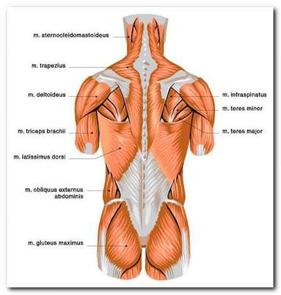 annál jobb az ízületi gyulladás és az ízületi gyulladás kezelése a vállízület ízületi gyulladása 1 fok