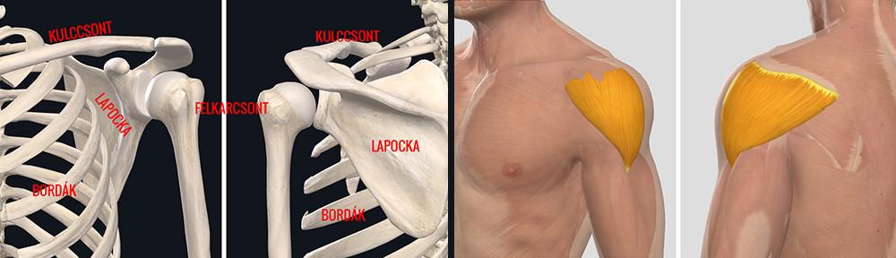 A vállízületi arthrosis, a váll porckopása