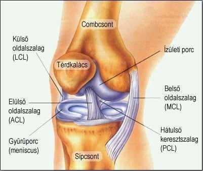 mi a helyzet a térdízület gyulladásával pitypang artrózis kezelésében