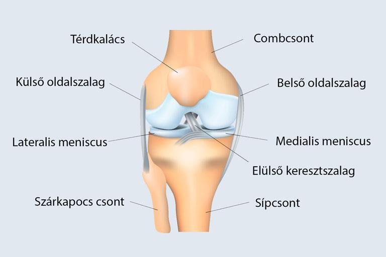 térdízület fájdalom blokk ízületi szalagbetegségek