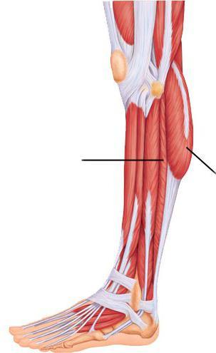 térdízület kapszula vékony tabletták a deformáló artrózis kezelésében