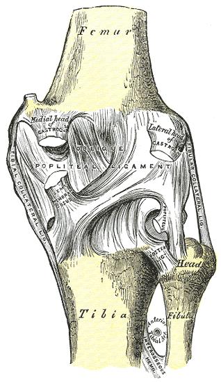 a térd ízület kézkrém ízületi fájdalmakhoz
