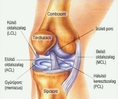 alapvető gyógyszerek a térd ízületi gyulladáshoz osteoarthritis symptoms fatigue