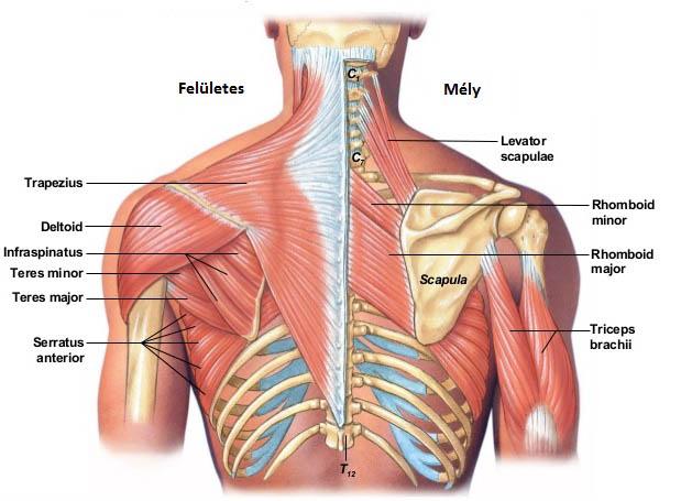 megszabadulni a vállízület fájdalmától segít e a solidol ízületi fájdalmak esetén