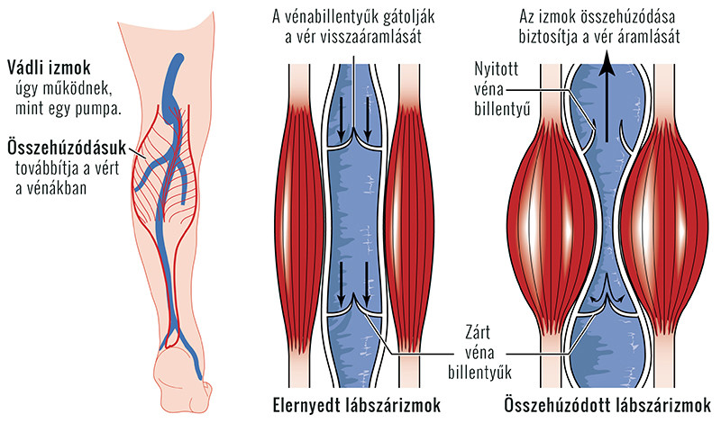 fájdalom a lábban és az ízületekben miért fáj a vállízületek keze