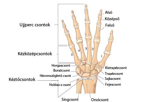 fájdalom a kéz ízületeiben guaval ízületi javítás rheumatoid arthritis esetén