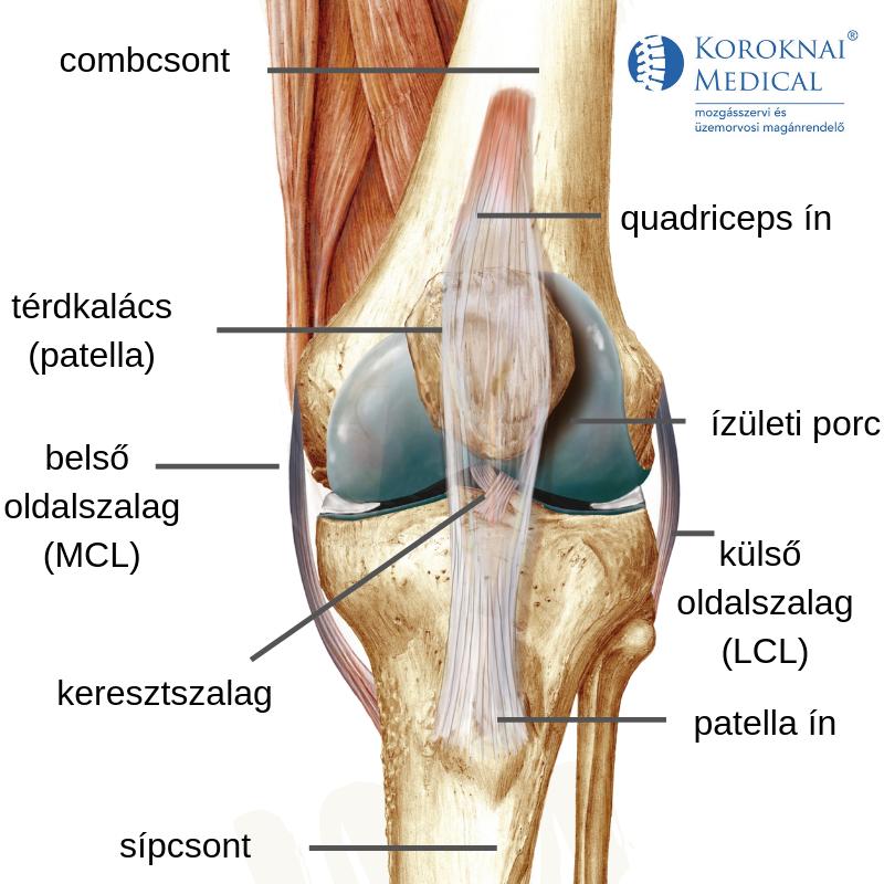 mit kell tenni ha az ízület csontritkulás miatt fáj